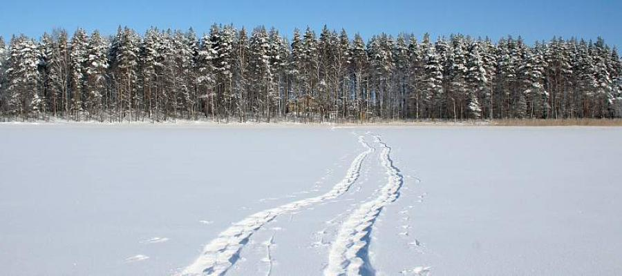 Finnish winter - pure nature, peace and wilderness.