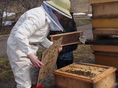 Hunajakennojen tarkastus